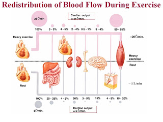 redistributionofbloodflow www.learn.sdstate.edu
